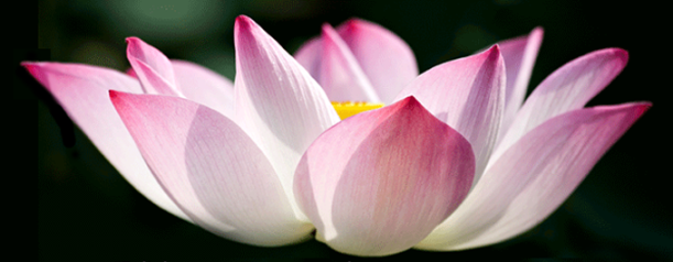 lotus18750-cro87500